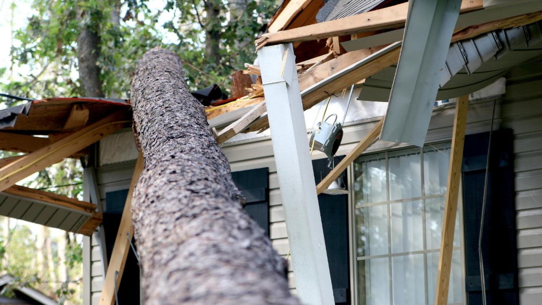 Umgestürzter Baum ist in ein Hausdach gestürzt
