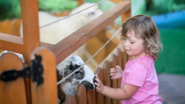 Ein Mädchen streichelt vorsichtig ein Schaf und lächelt