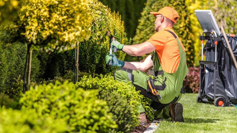 Gärtner schneidet Pflanzen im Garten in Form