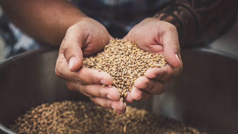 Ein Landwirt lässt Getreidekörner durch seine Hände rieseln