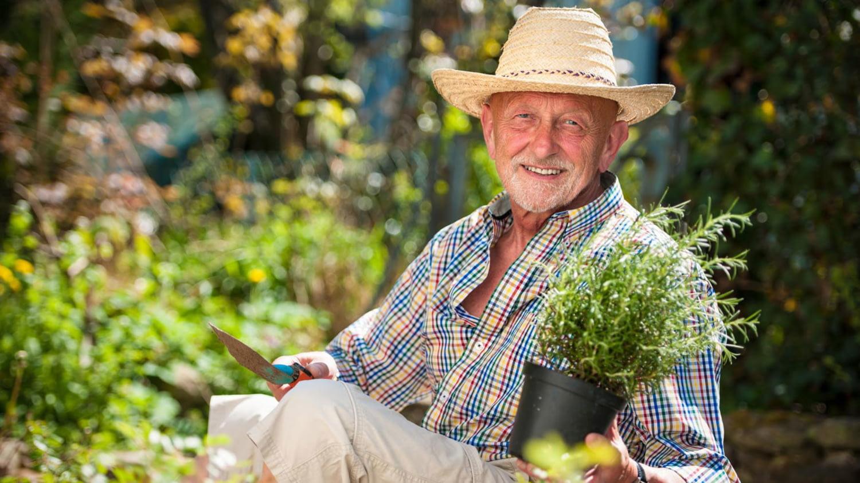 Älterer Mann pflanzt im Garten eine Rosmarinstrauch