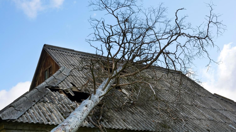 Ein umgestürzter Baum ist auf ein Dach gefallen und hat ein Loch hineingerissen