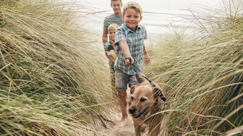 Mit Hund braucht man eine spezielle Versicherung: Eine Familie läuft mit einem Hund an der Leine durch Sand und Schilf