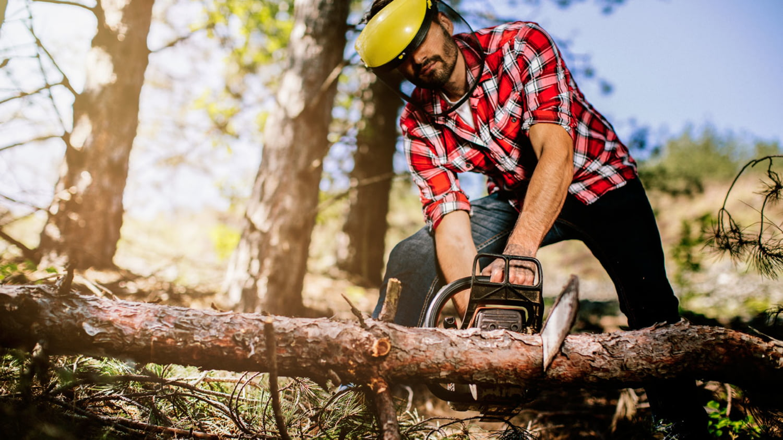 Ein Mann mit Schutzkleidung sägt einen Baum mit einer Kettensäge durch