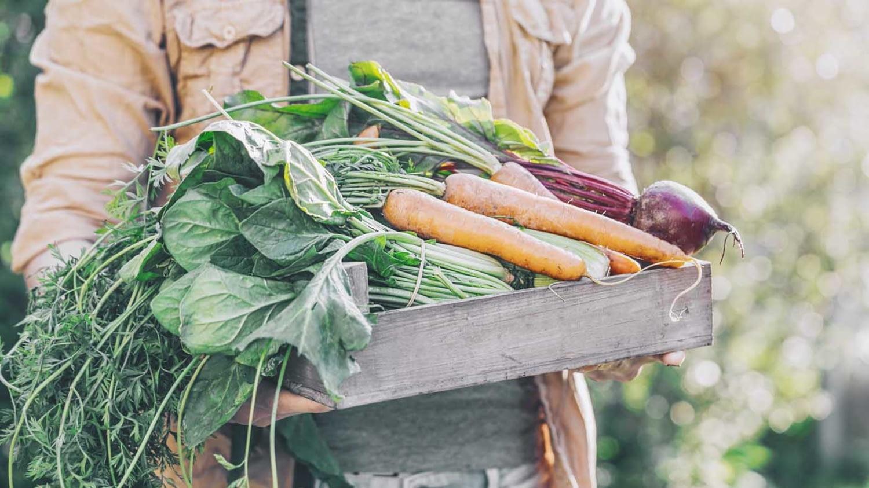 Ein Mann trägt eine flache Holzkiste mit verschiedenen Gemüsesorten